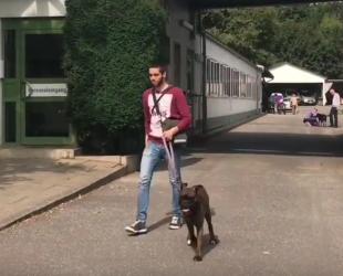 Gassi Gehen Mit Hunden Im Tierheim Yalla Hamburg